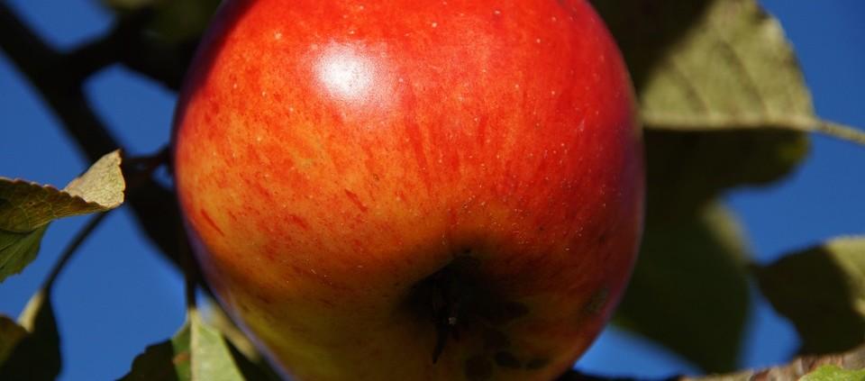 apple-978644_960_720
