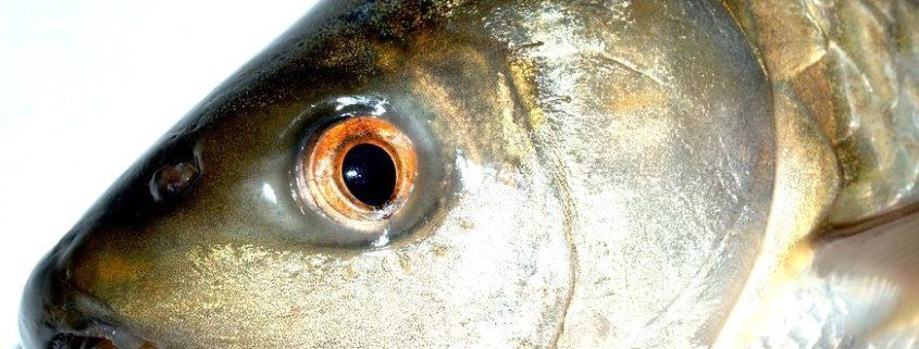 fish-1553046_960_720