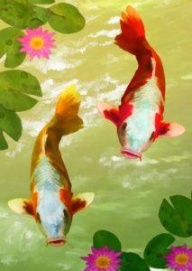 fish karp-884694_960_720