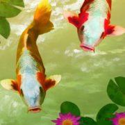 fish mini-884694_960_720